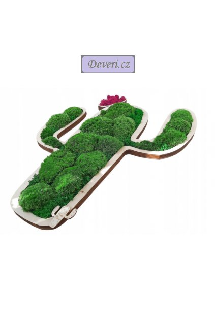 Živý obraz kaktus 60cm zelený