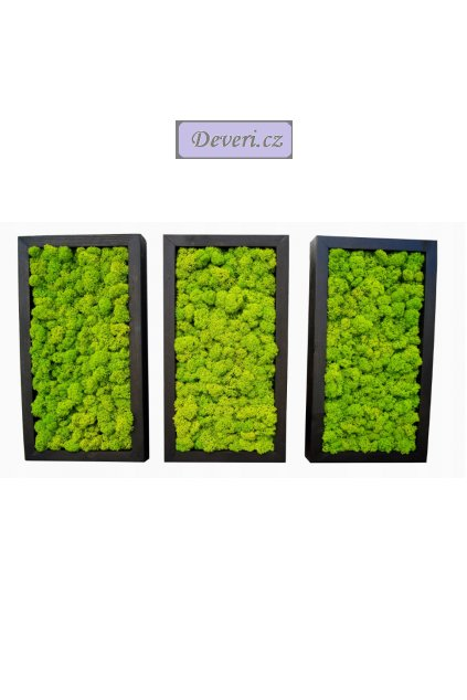 Obrazy 3 rámečky mech různé barvy 20x37cm