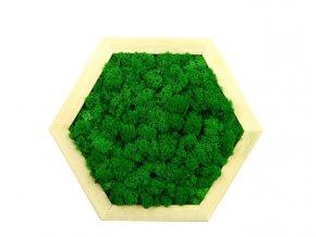 Obraz šestiúhelník s mechem průměr 25cm zelený (2)