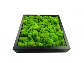 Živý obraz mech dřevo 23x23cm různé barvy (2)