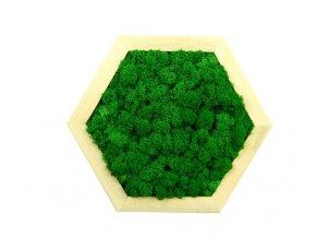 Obraz šestiúhelník s mechem průměr 30cm zelený (2)