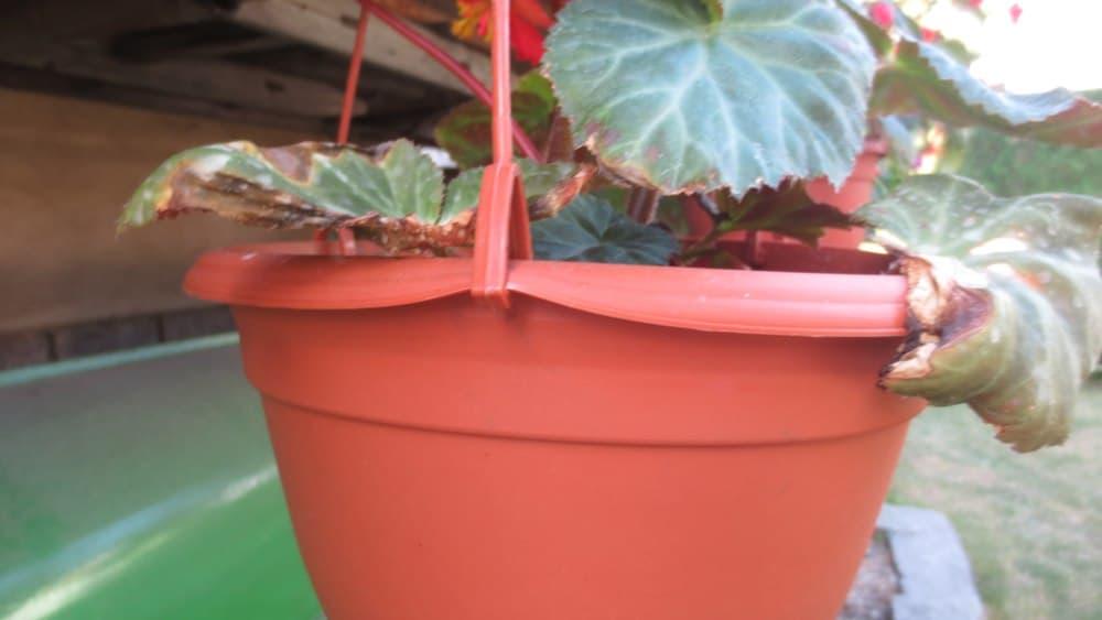 Závěsný květináč, žardinka - způsob zavěšení