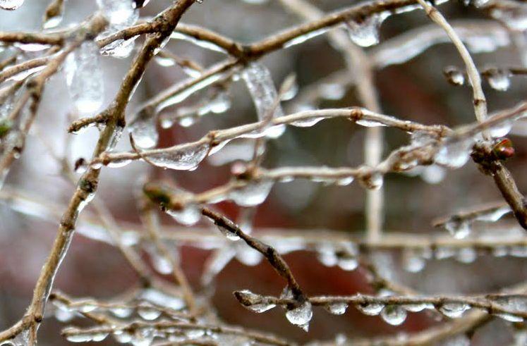 Zmrzlé květy meruněk
