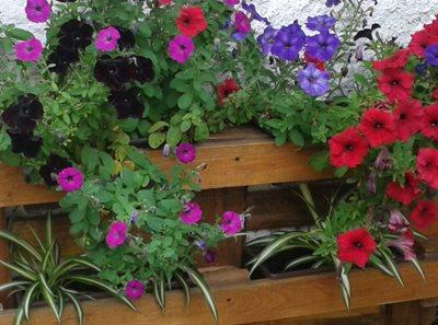 kvetiny83e5