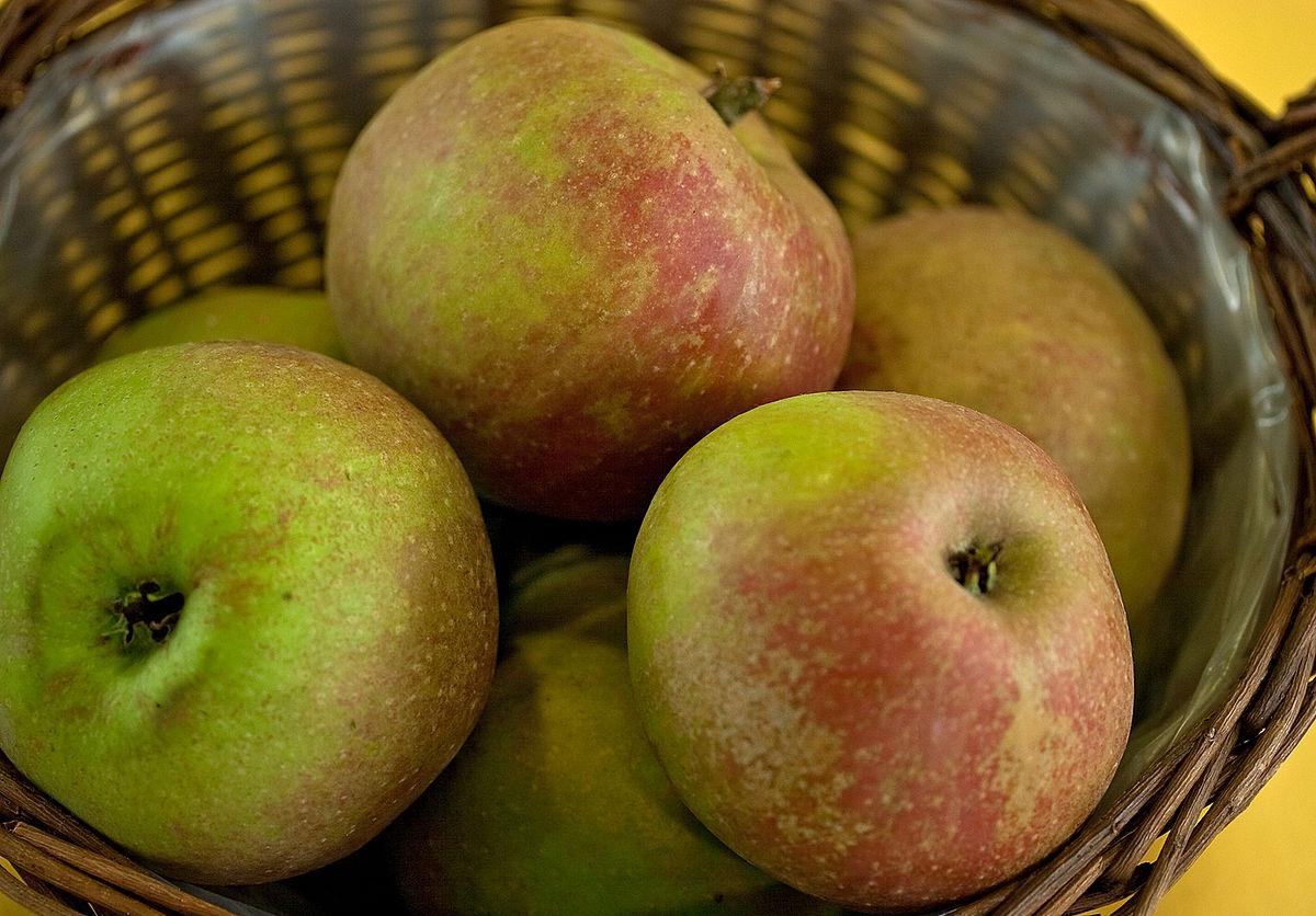 Odrůdy na cider III - Booskopské