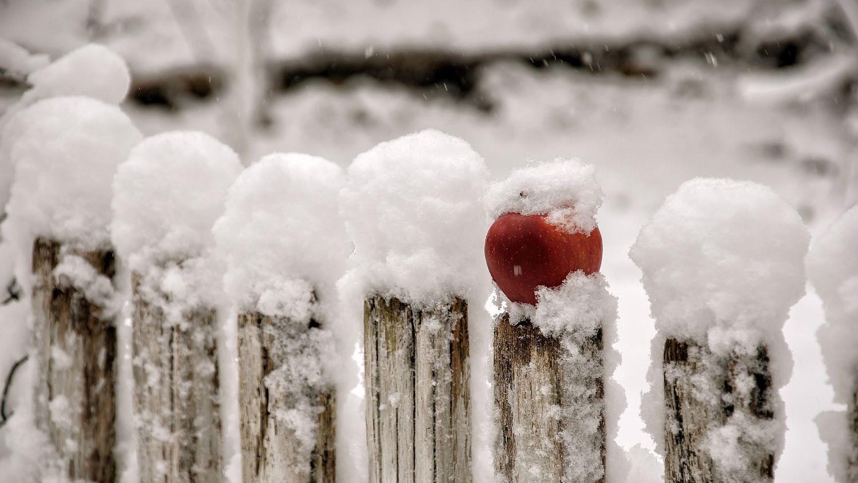 Zimní sad 1