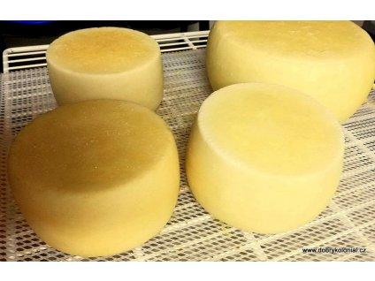 GAMMA 21 - ochranná kultura DL3,5 na 500-1000l mléka