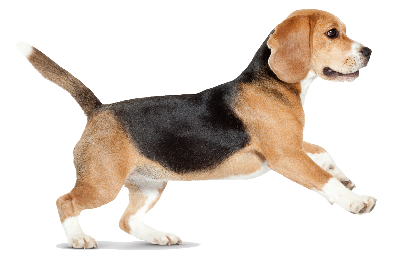 Antiparazitika pro psy Náchod