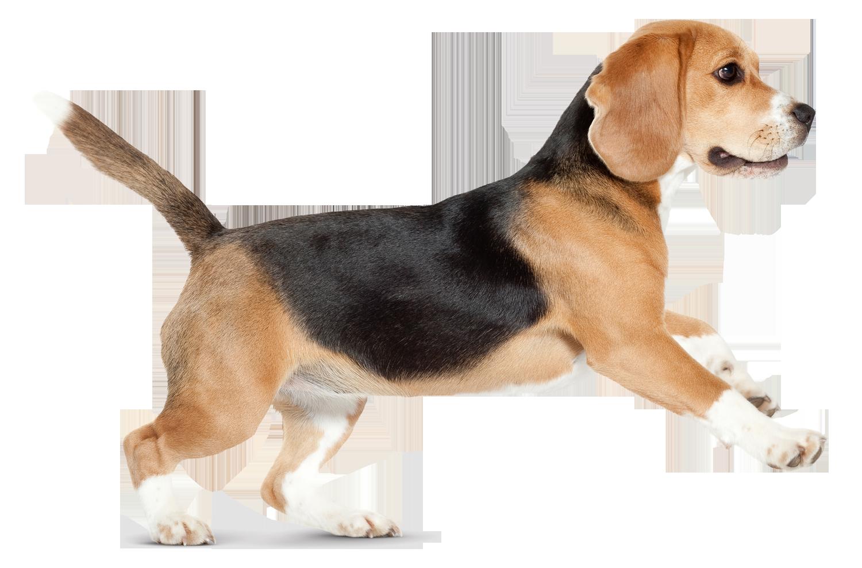 Krmivo pro psy Náchod