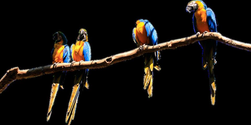 Zobání pro ptáky
