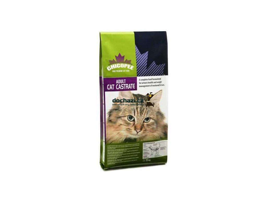 CHICOPEE - cat CASTRATE