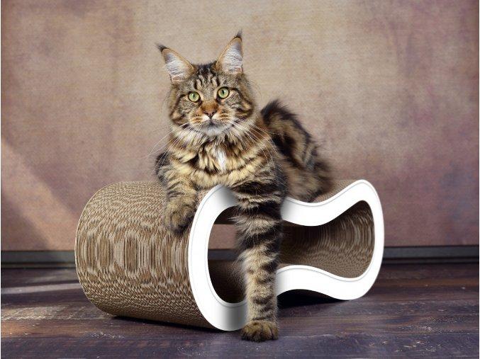 cat on singha m 000a 003
