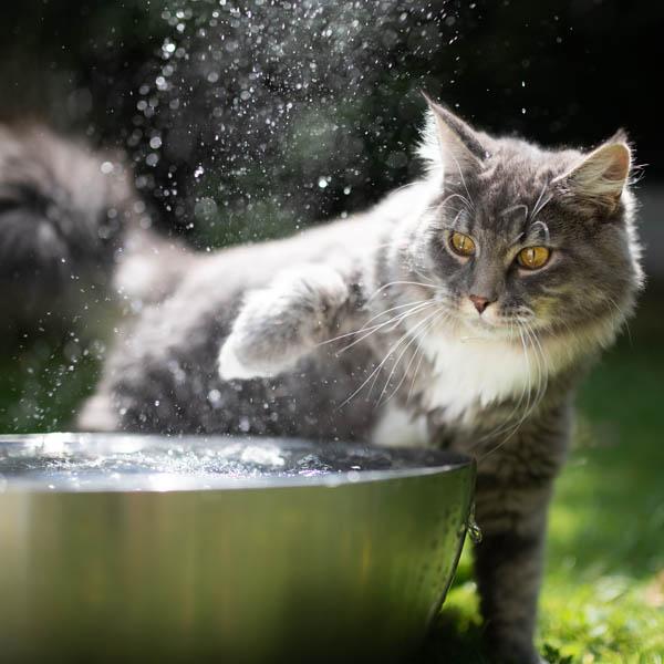 Ako zvládajú mačky vysoké letné teploty? 07/21
