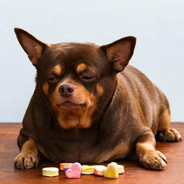 B.A.R.F. – cesta k zníženiu hmotnosti u psov 06/2021