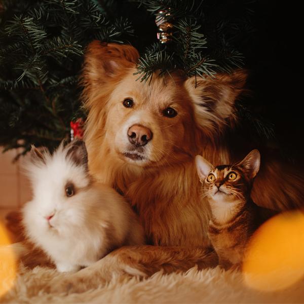 Otváracia doba počas vianočných sviatkov a nového roka 2021 Dogee