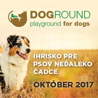 Doground playground for dogs