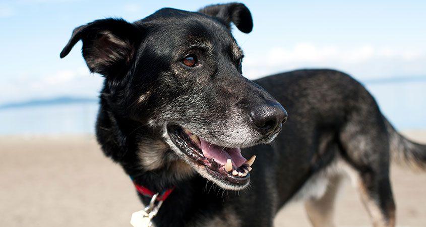In-praise-of-senior-dogs