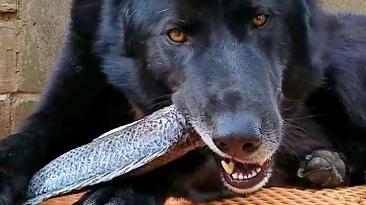 tuky_vyziva_pre_psov