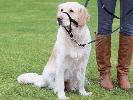 ohlavka pre psov