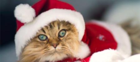 5 tipů na dárky pro kočky