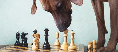Oblasti pro využití motivačně logických her
