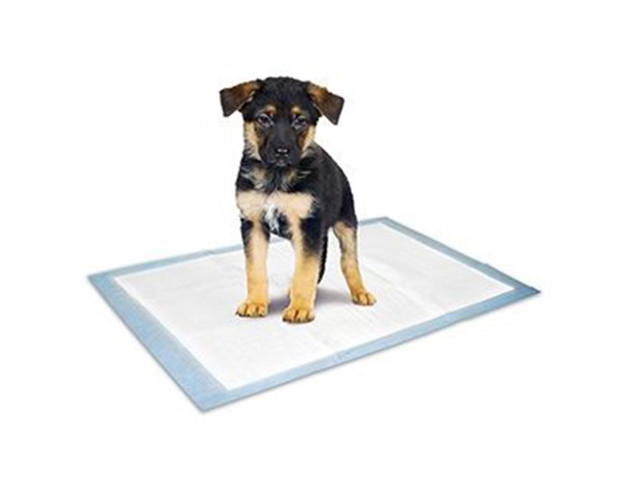Tréninkové podložky pro psy
