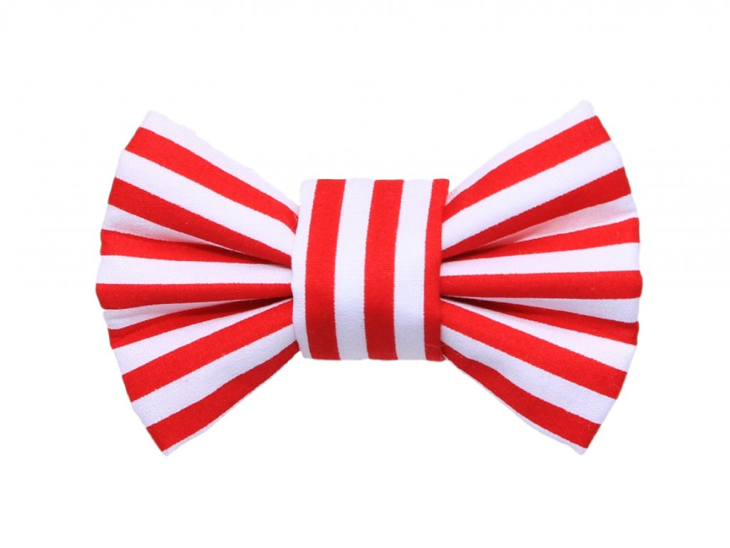 red stripes funky dog
