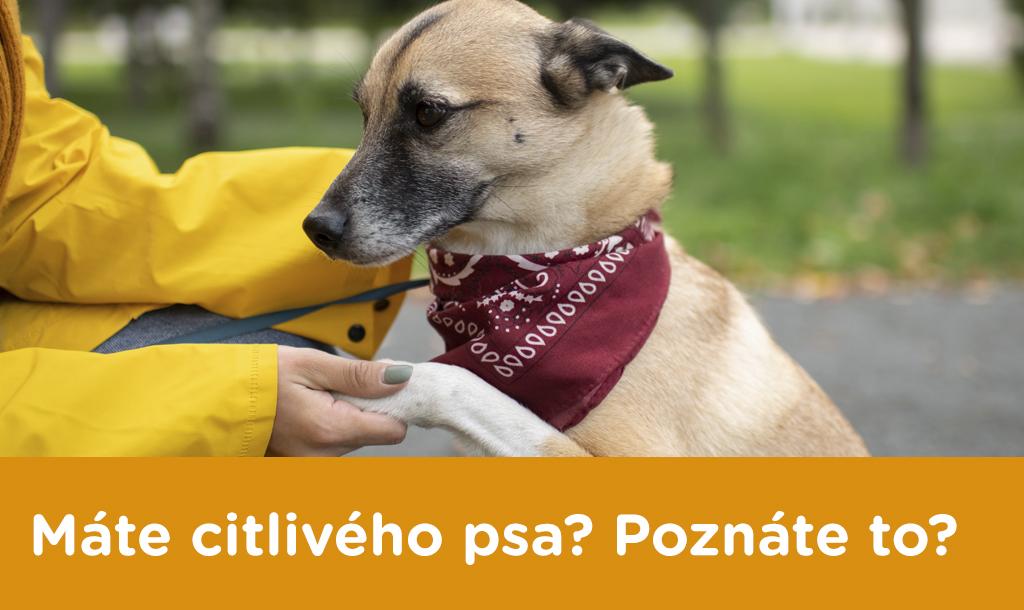 Máte citlivého psa? Poznáte to?