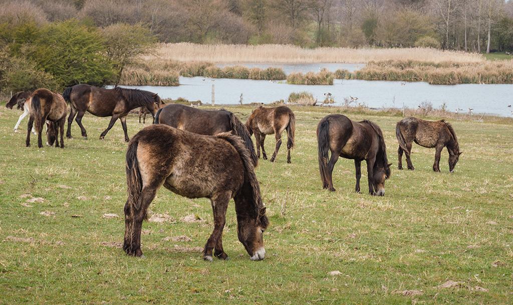 Divocí koně opět cválají českou kotlinou
