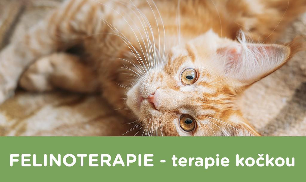 Terapie Kočkou