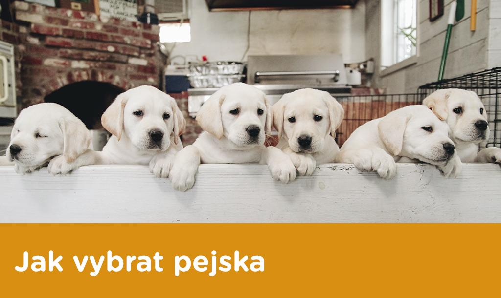 Jak vybrat pejska - Který pes se kvám hodí?