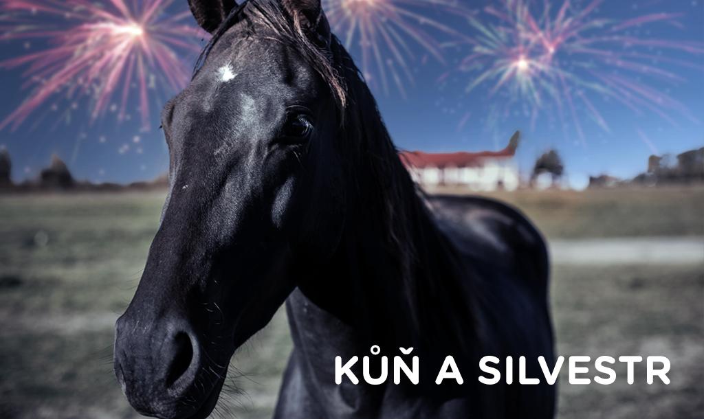 Kůň a Silvestr