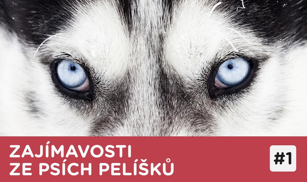 Zajímavosti ze psích pelíšků – Jak barevný je psí svět?