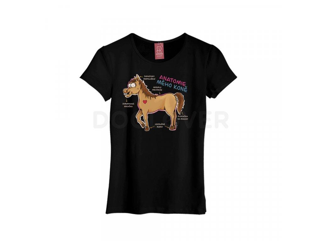 anatomie meho kone