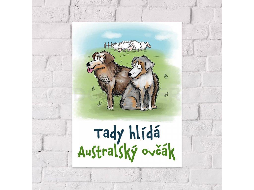 australsky ovcak