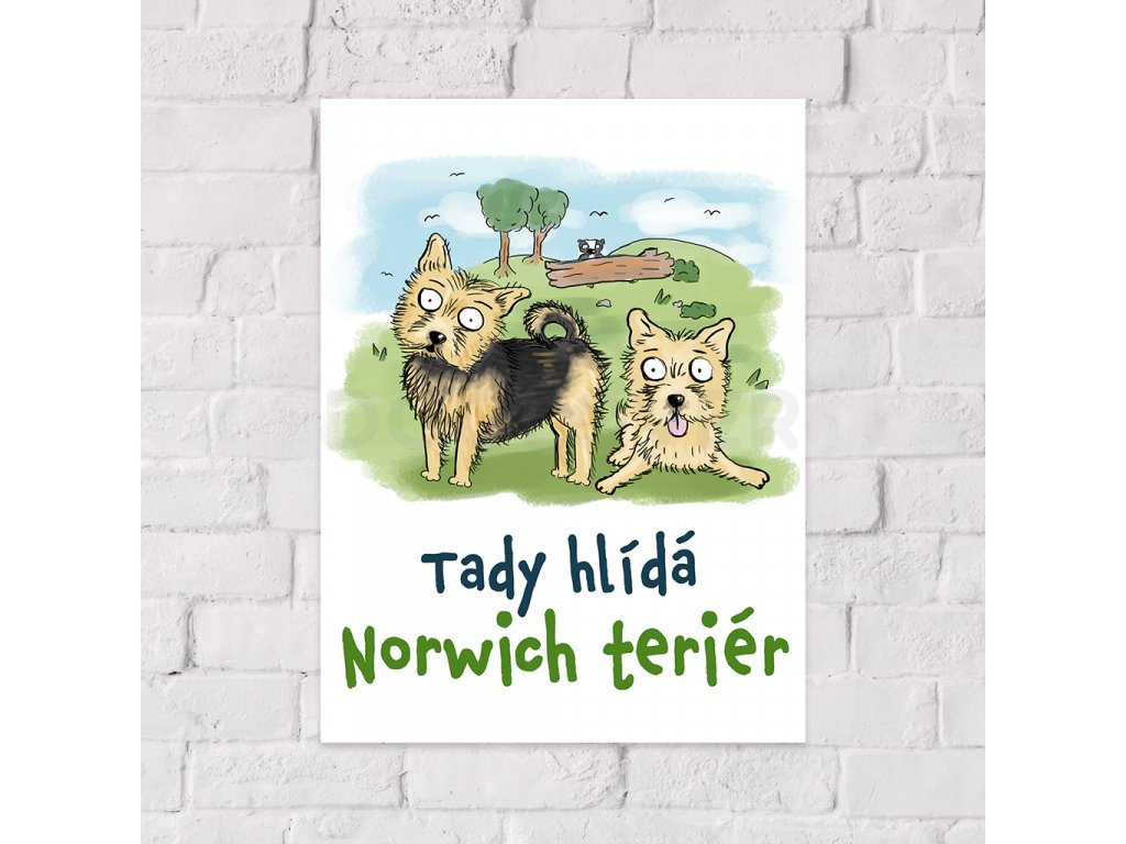 norwich teriér