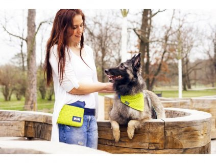 1367 1 salvador sada venceni vycvik psa psi obojek voditko stylovy krasny zeleny modry kabelka pamlskovnik vycvikova vesta sukne