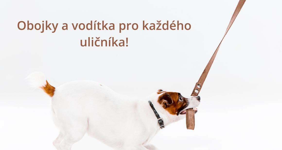 Obojky a vodítka pro psy