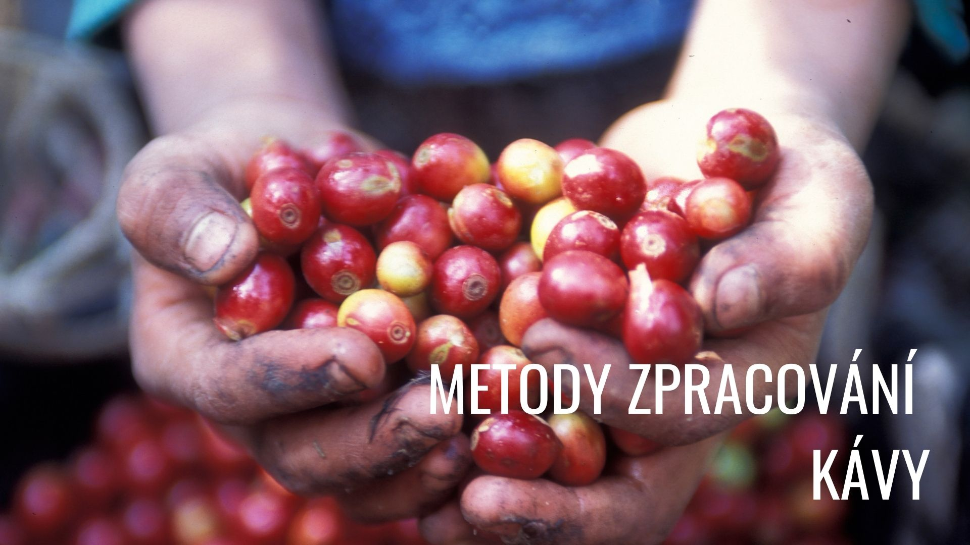 Metody zpracování kávy