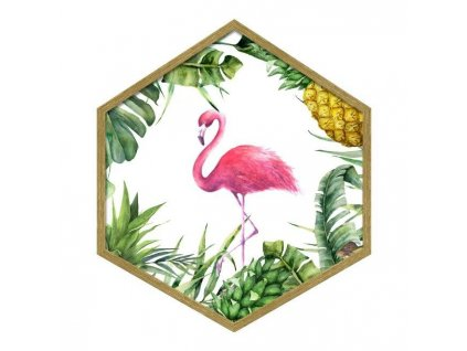 Obraz Hexagon Flamengo 35 x 40 cm Doleo.cz