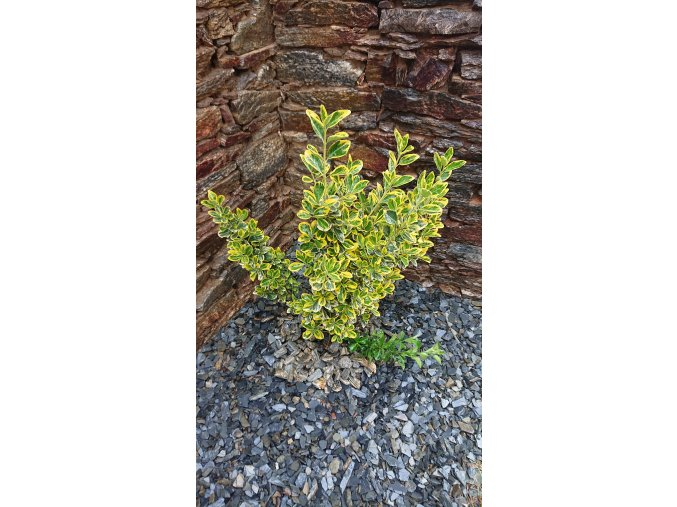 Kamenná kůra Břidlice 6-33 mm 25 kg pytel