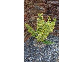 Kamenná kůra Břidlice 6-33 mm 1t big bag
