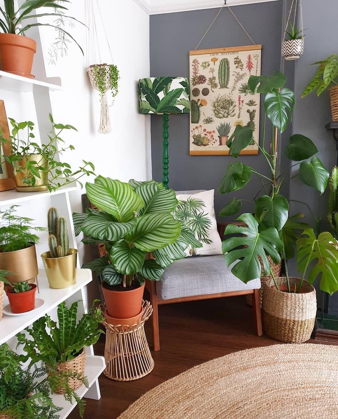 rostliny-dekorace-inspirace