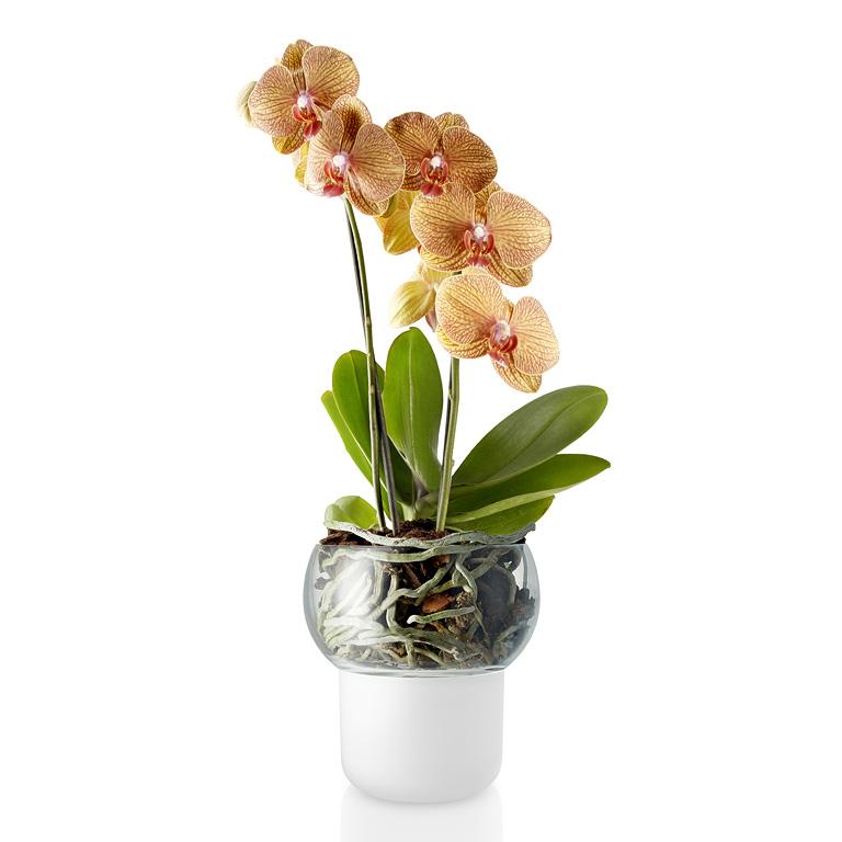 Skleněný samozavlažovací květináč na orchideje OE 13 cm, Eva Solo