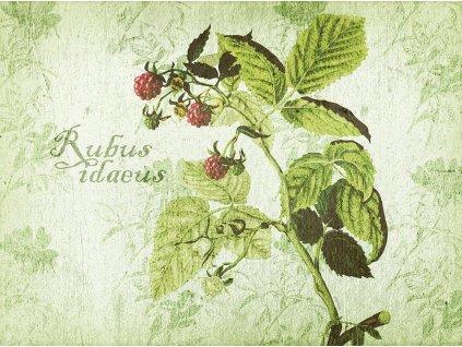 Sada 2 podložek na stůl z korku Arte Rubus Idaeus 40 x 29,5 cm AMBITION