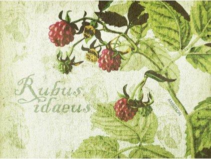 Sada 6 podložek na stůl z korku Arte Herbs 10 x 10 cm AMBITION