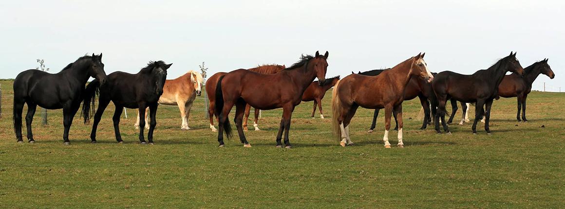 Domov pro koně  - soužití