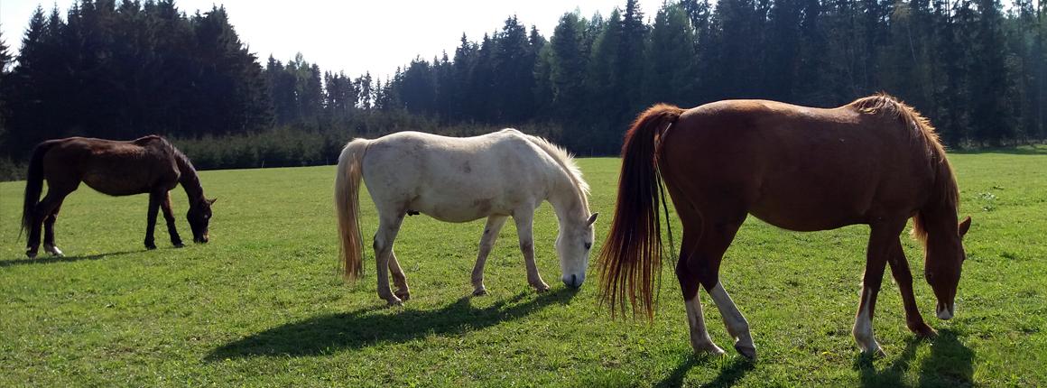 Domov pro kone  - pastva 1