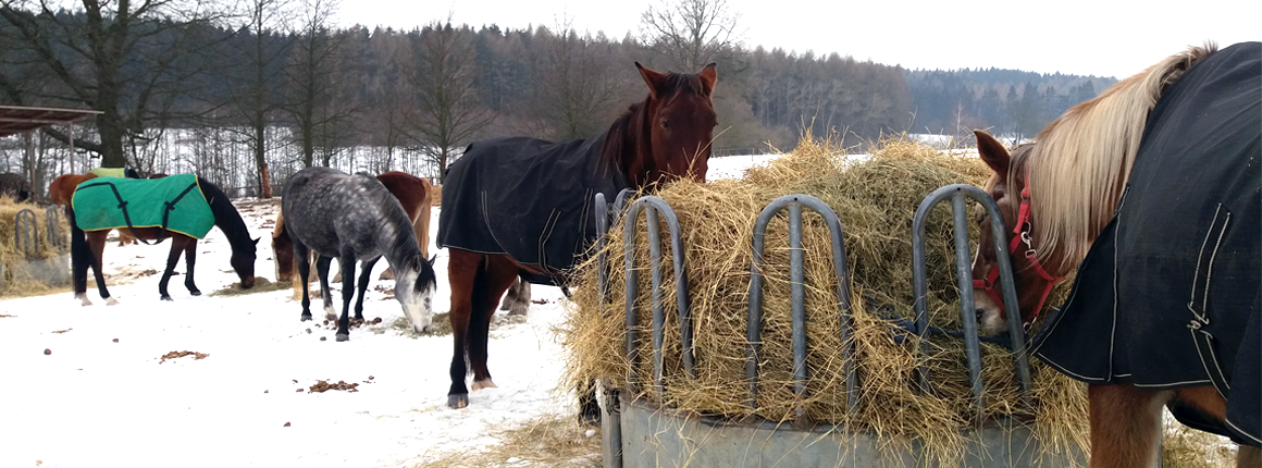 Domov pro koně - život v zimě 1