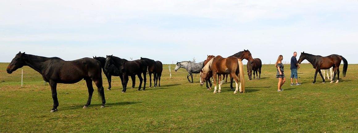 Domov pro koně - volnost pro koně je důležitá